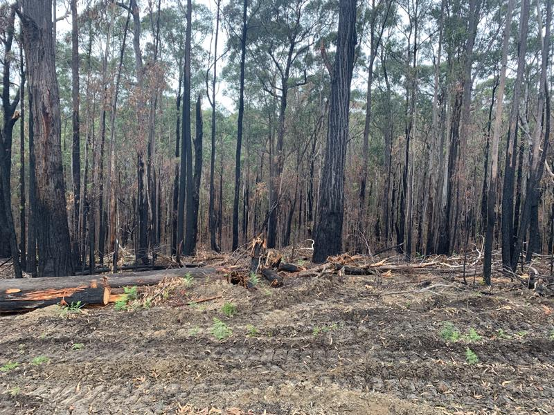 Hardwood timber affected by the bushfires