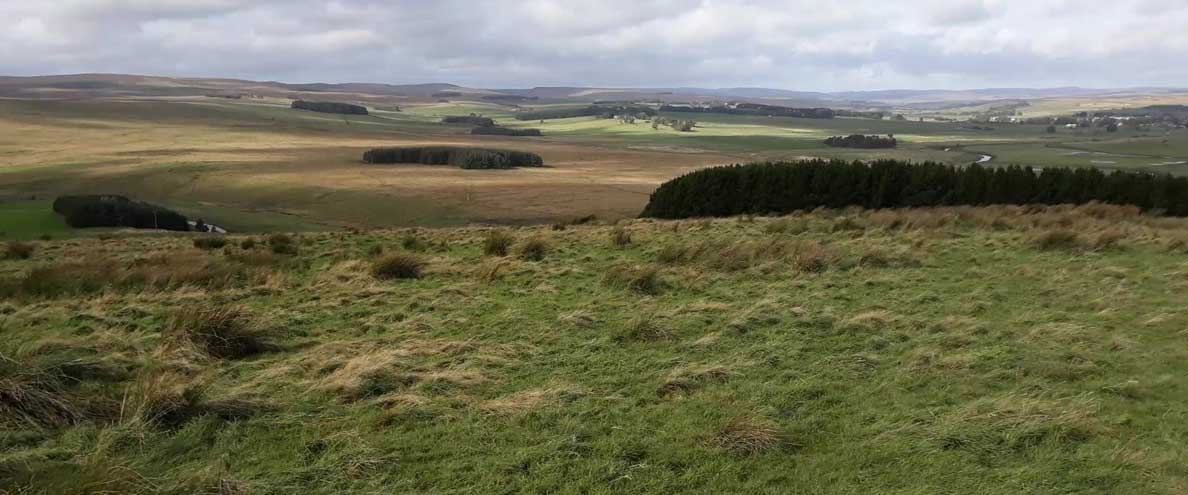 Forestry England makes significant land purchase