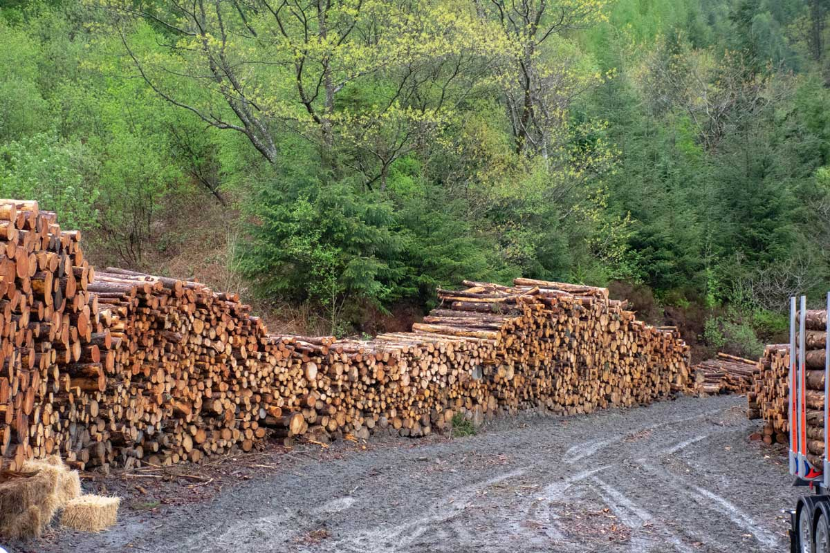 Timber stacked in the wood