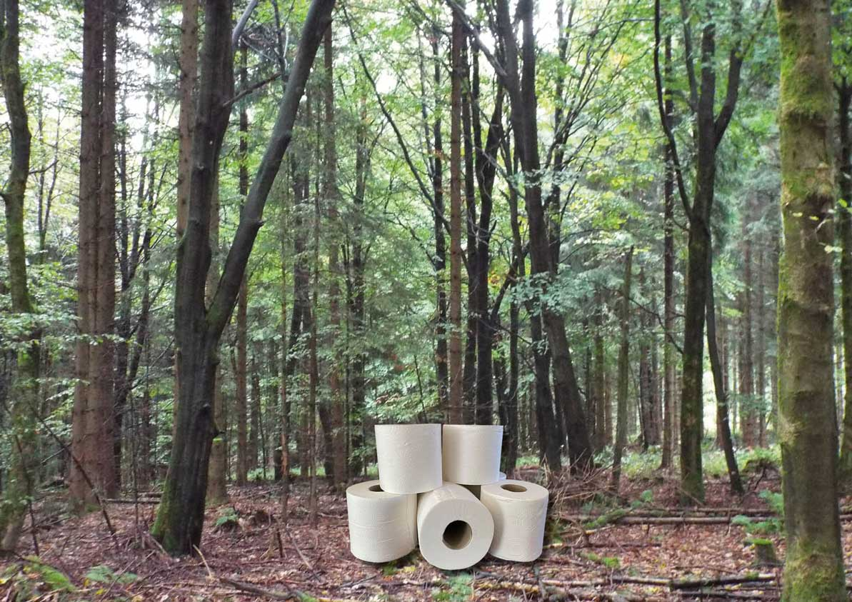 Toilet roll with a background of forest