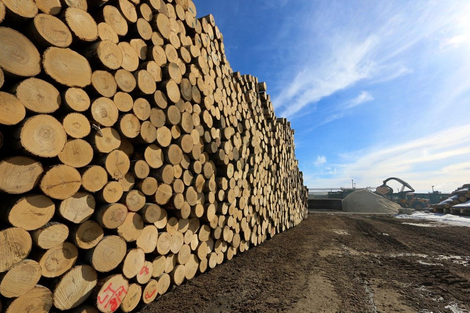 struggling forestry companies