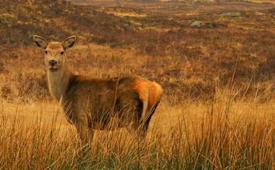 Understanding deer damage is crucial when planting new forests