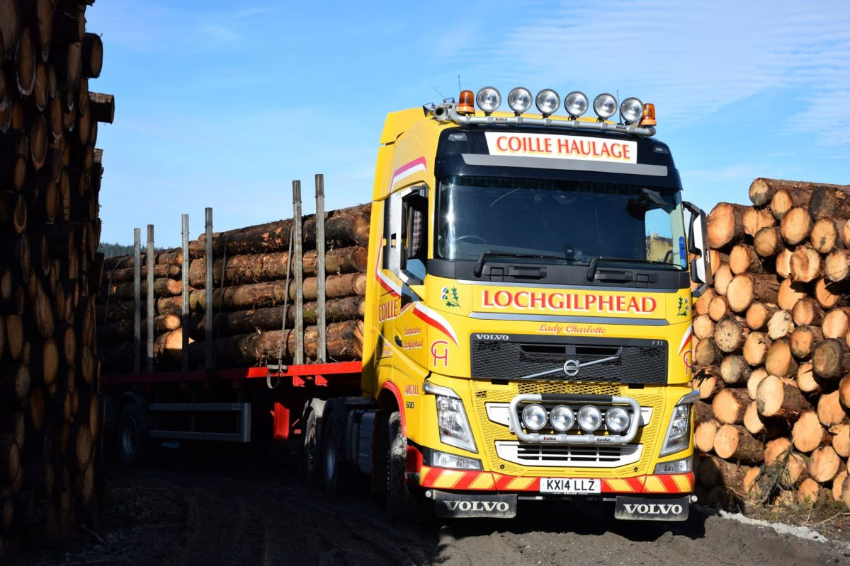 global demand for softwood
