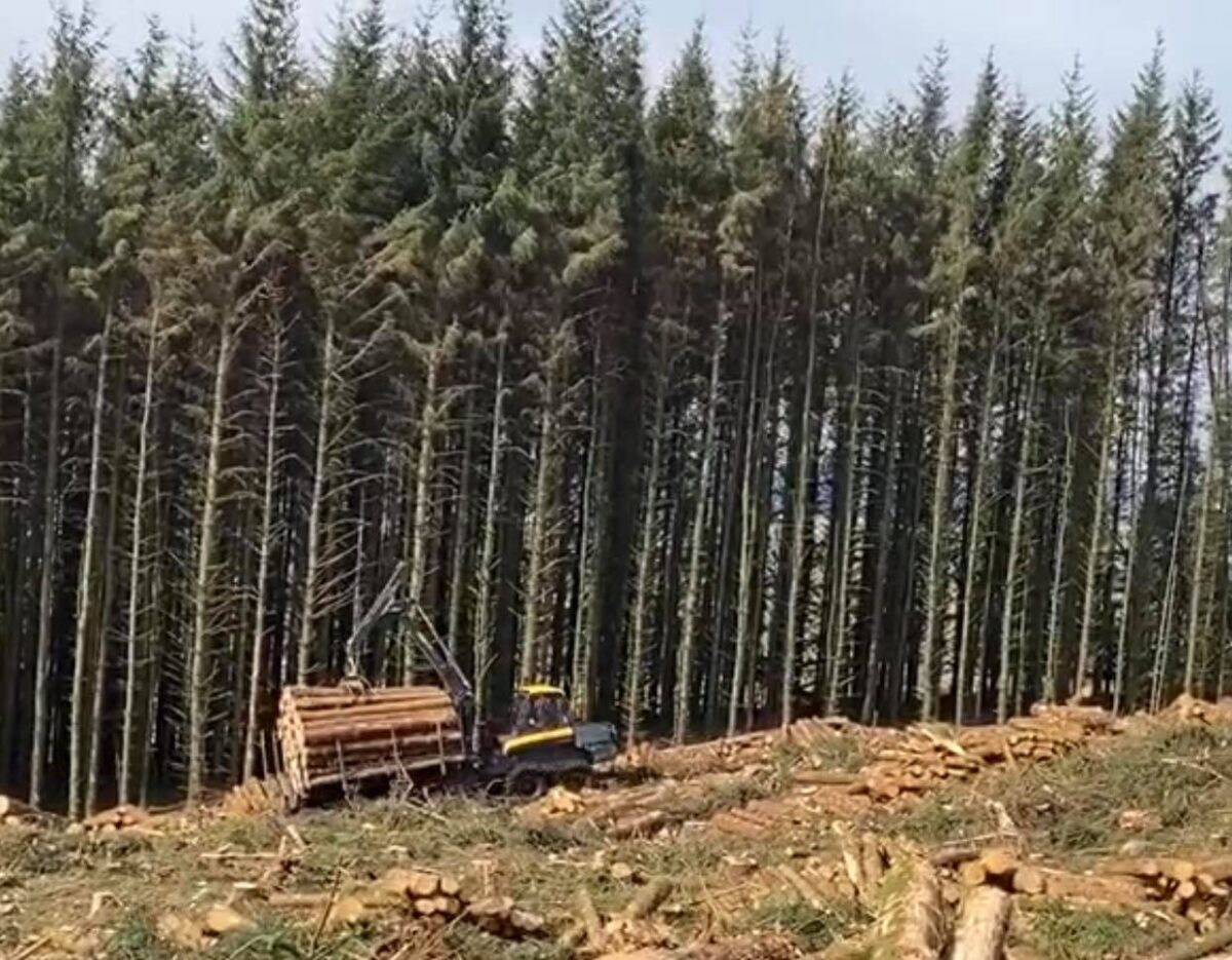 upsurge in demand for softwood