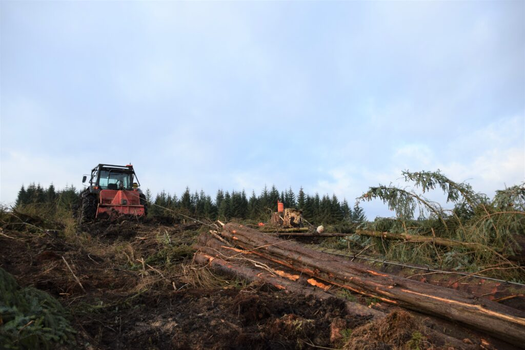 Felling and skidding the timber out of the ravine.