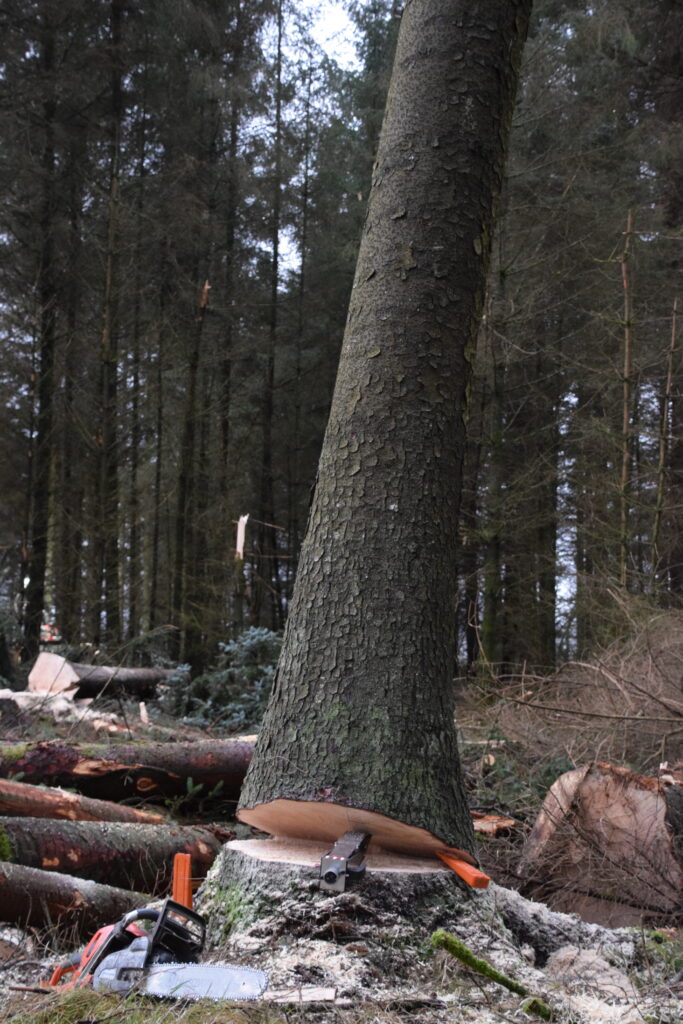 Tree being felled with a felling aid