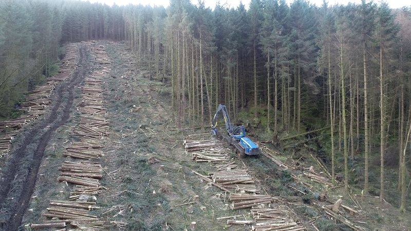 Is forest harvesting increasing