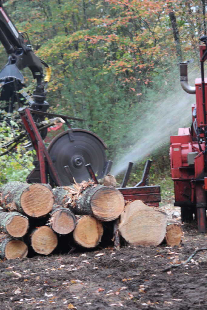 Crosscut saw in action.