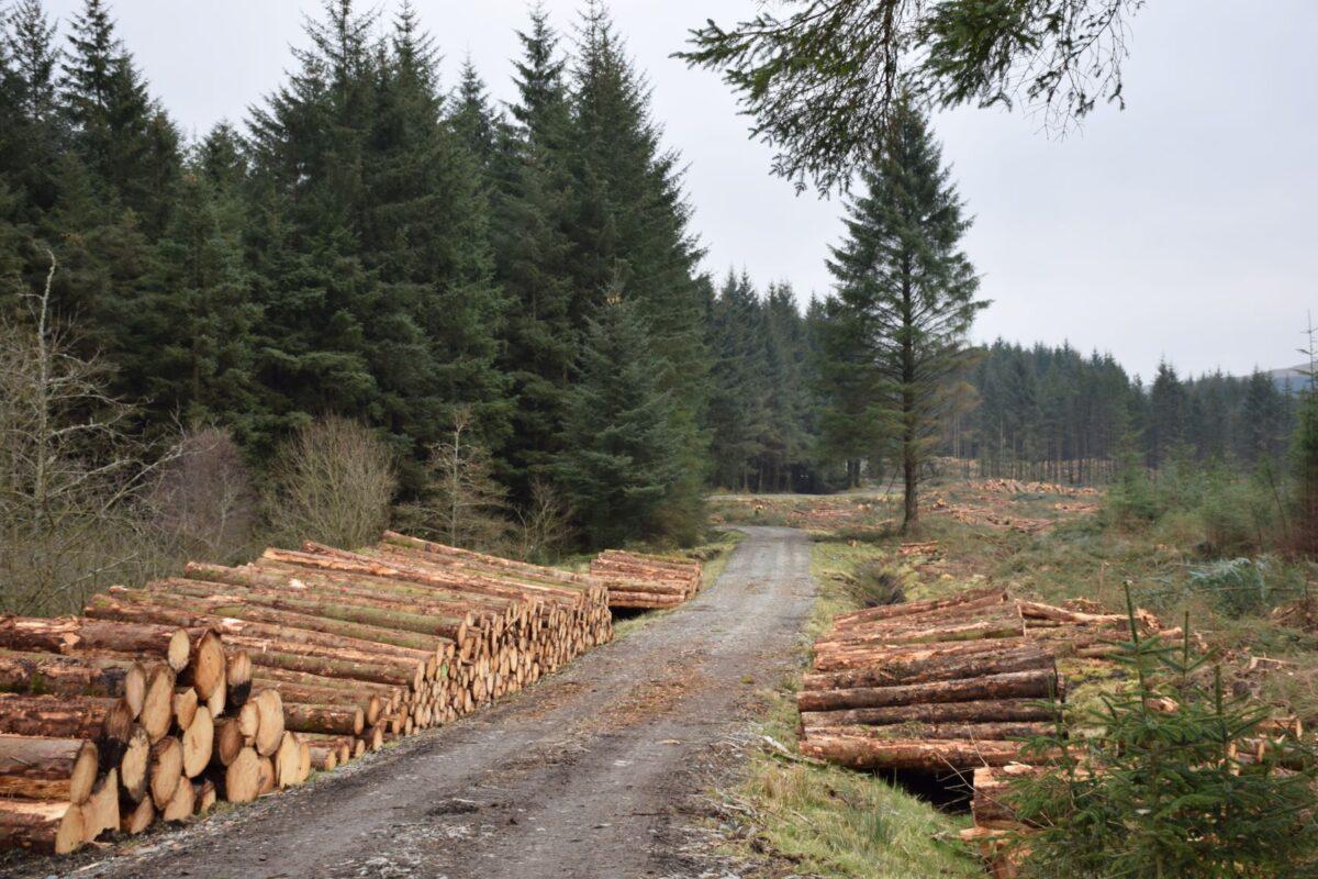 Irish Timber